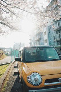 黄色の車と桜の木の写真・画像素材[1884049]