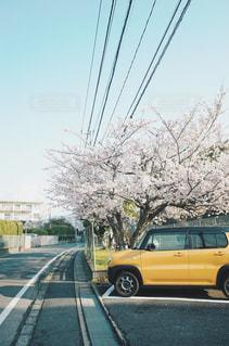 黄色の車と桜の木の写真・画像素材[1884052]