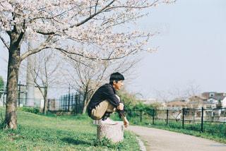桜並木をお散歩の写真・画像素材[1884066]