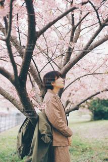 桜の木の下での写真・画像素材[3011072]