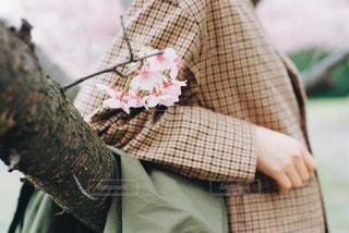 桜とジャケットの写真・画像素材[3011085]