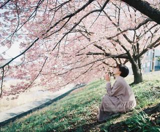 桜の木の下での写真・画像素材[3011073]