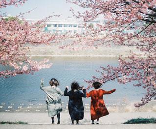 桜の木の下でジャンプ!の写真・画像素材[3011076]