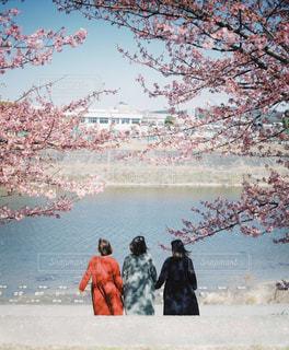 桜の下で手を繋いでの写真・画像素材[3011075]