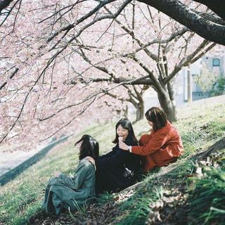 桜と女の子たちの写真・画像素材[3011077]
