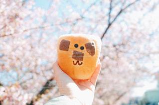 さくらとパンの写真・画像素材[3011084]