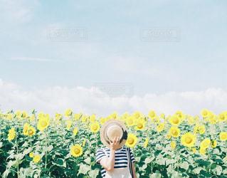 ひまわり畑と女の子の写真・画像素材[3014506]