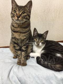 猫の写真・画像素材[310264]