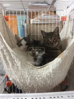 猫の写真・画像素材[310268]