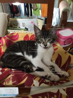 猫の写真・画像素材[310273]