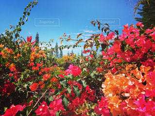 花の写真・画像素材[310486]
