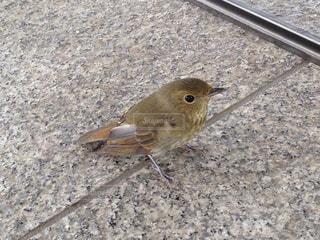 鳥の写真・画像素材[310307]