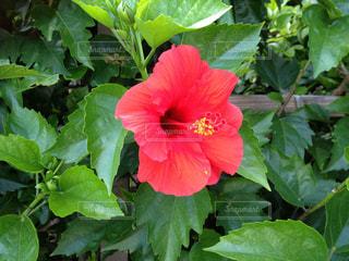 花の写真・画像素材[310424]
