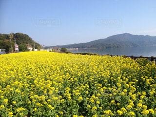 春の写真・画像素材[310758]