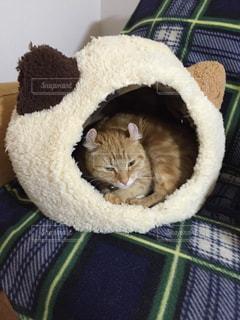 猫 - No.310530
