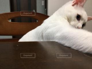 猫の写真・画像素材[311366]