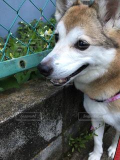 犬の写真・画像素材[553847]