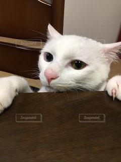 猫の写真・画像素材[553849]