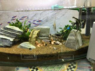 魚の写真・画像素材[650324]