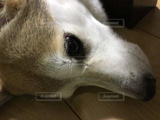 犬の写真・画像素材[673735]