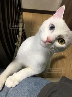 猫の写真・画像素材[673737]