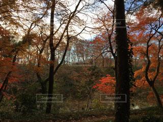 森の中の木の写真・画像素材[2841028]