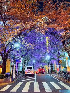 夜の花道の写真・画像素材[4332596]
