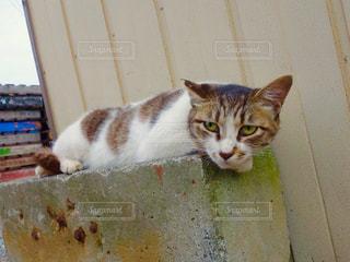 猫の写真・画像素材[316465]