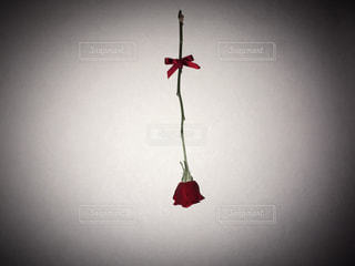 花の写真・画像素材[312004]