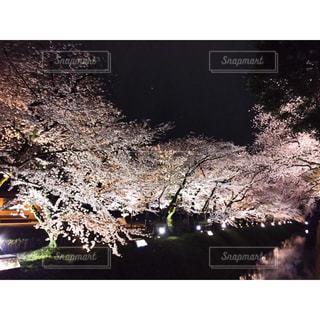 春の写真・画像素材[312045]