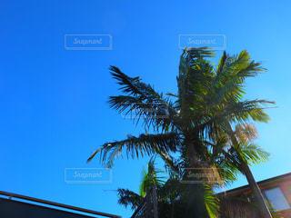 風景の写真・画像素材[316664]