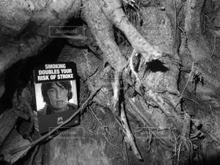 木の写真・画像素材[316666]