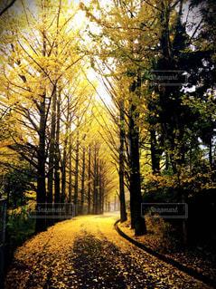 森林の写真・画像素材[313055]