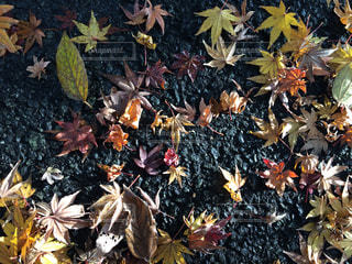 秋の写真・画像素材[313548]