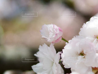 自然の写真・画像素材[312243]