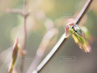 自然の写真・画像素材[312245]