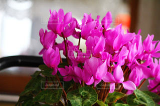 花の写真・画像素材[311270]
