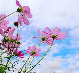 花の写真・画像素材[311281]