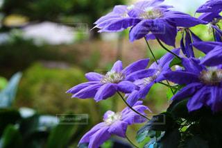 花の写真・画像素材[311291]