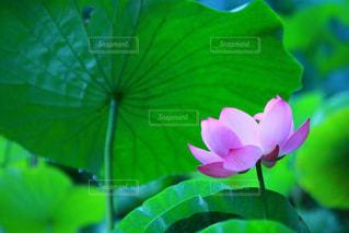 花の写真・画像素材[311296]