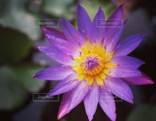 花の写真・画像素材[311300]
