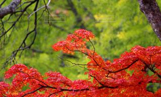 秋の写真・画像素材[311302]