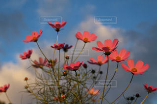 花の写真・画像素材[311306]