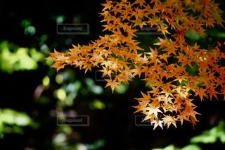 樹木の写真・画像素材[1585022]
