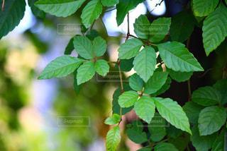 植物のクローズアップの写真・画像素材[2830870]