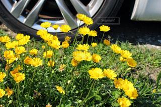 花の写真・画像素材[312175]