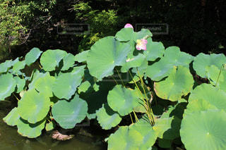 庭の写真・画像素材[312286]
