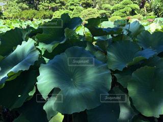 庭の写真・画像素材[312287]