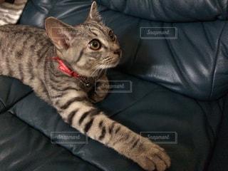 猫の写真・画像素材[311582]