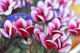 花の写真・画像素材[311693]